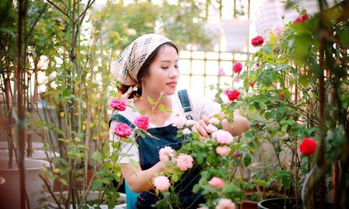 chăm sóc vườn hoa hồng