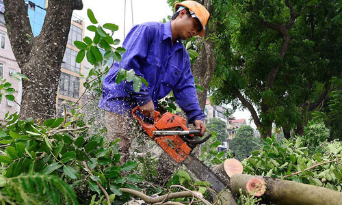 dịch vụ chặt cây, cắt tỉa, cưa cây và đốn hạ cây xanh