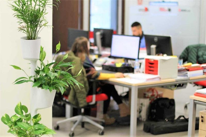 cây xanh giúp nhân viên văn phòng tập trung làm việc