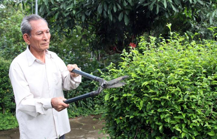 cụ già chăm sóc cây xanh