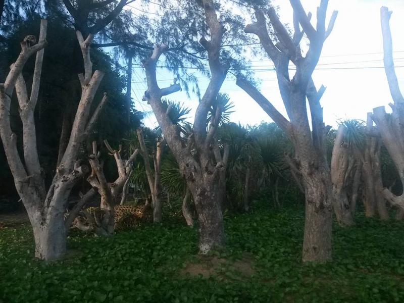 vườn cây phát tài núi