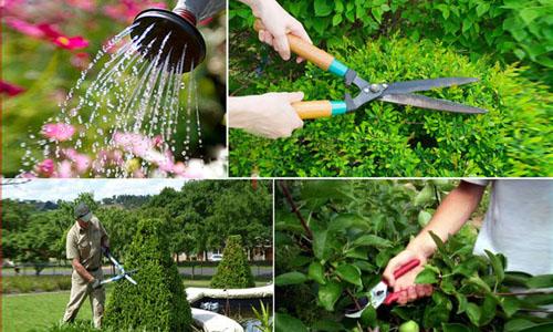 dịch vụ chăm sóc vườn cây xanh