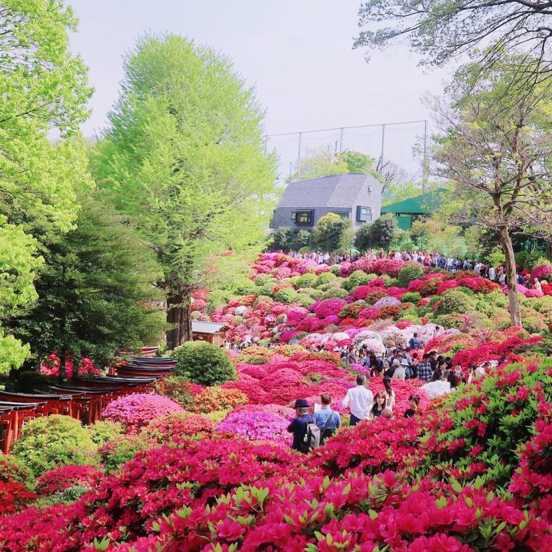 vườn hoa đổ quyên