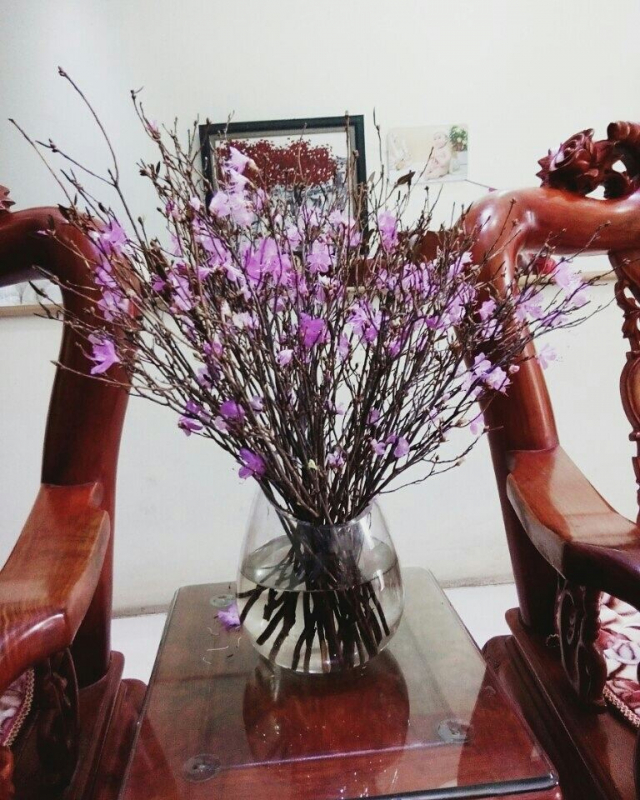 hoa đỗ quyên khô ngủ đông
