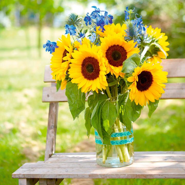 công dụng hoa hướng dương