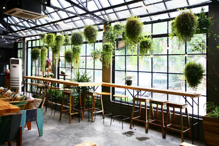 cây xanh trong quán cà phê