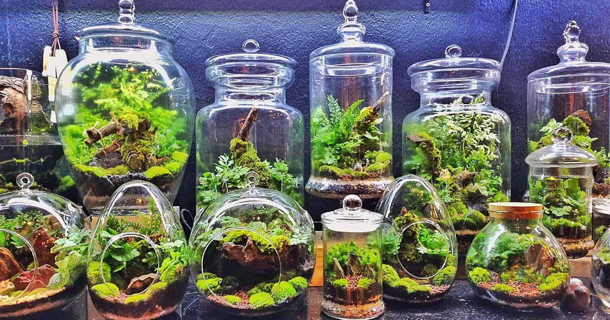 cách làm terrarium