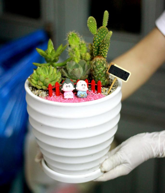 chậu cây terrarium