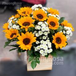 Lẵng hoa sinh nhật Hướng Dương Cúc Calimero Trắng