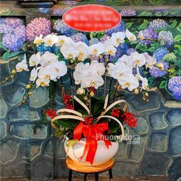 Lan Hồ Điệp Trắng 9 cành Phú Qúy
